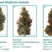 Cannabis-Cup-Winner